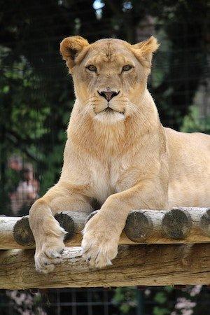 Sehenswürdigkeit: Zoo Lissabon